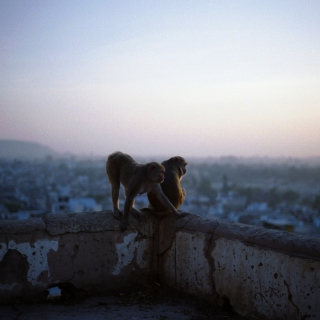 Monkeys - Obrázkek zdarma pro 128x128
