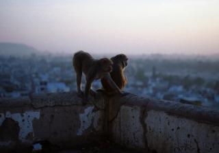Monkeys - Obrázkek zdarma pro LG P700 Optimus L7
