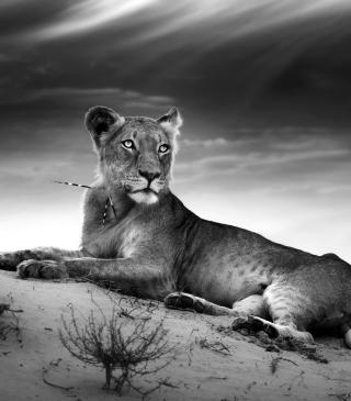 Lioness - Obrázkek zdarma pro 240x320