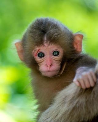 Monkey Baby - Obrázkek zdarma pro Nokia C3-01 Gold Edition