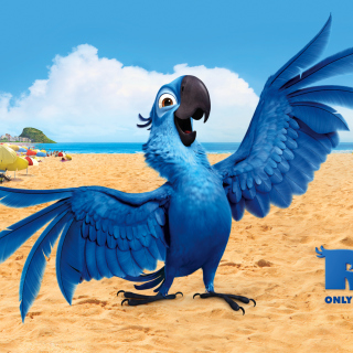 Rio, Blu Parrot - Obrázkek zdarma pro iPad 3