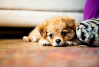 Картинка Sad Puppy на андроид