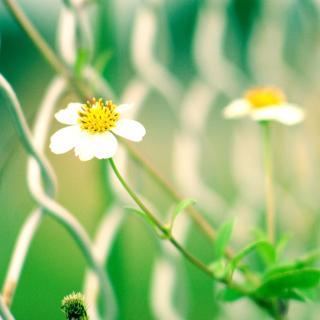 Macro flowers and Fence - Obrázkek zdarma pro iPad