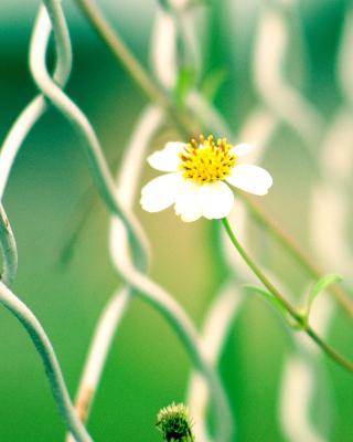 Macro flowers and Fence - Obrázkek zdarma pro 352x416