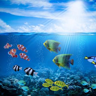 Horizon Colorful Sea World - Obrázkek zdarma pro 128x128