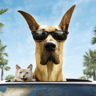 Funny Dog In Sunglasses - Obrázkek zdarma pro 1024x1024