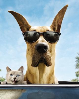 Funny Dog In Sunglasses - Obrázkek zdarma pro Nokia Asha 203