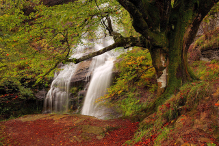 Path in autumn forest and waterfall - Obrázkek zdarma pro Widescreen Desktop PC 1280x800