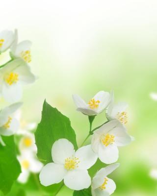 Jasmine delicate flower - Obrázkek zdarma pro iPhone 5S