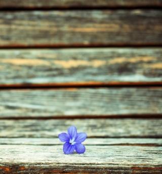 Little Blue Flower On Wooden Bench - Obrázkek zdarma pro iPad 2