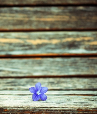 Little Blue Flower On Wooden Bench - Obrázkek zdarma pro iPhone 6 Plus