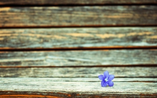 Little Blue Flower On Wooden Bench - Obrázkek zdarma pro Samsung Galaxy S6 Active