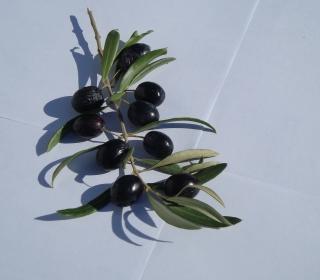 Olive Branch With Olives - Obrázkek zdarma pro iPad