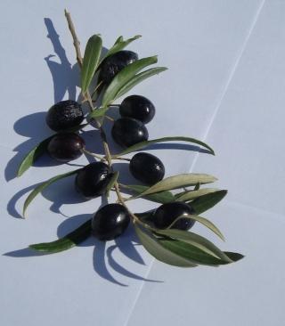 Olive Branch With Olives - Obrázkek zdarma pro Nokia X2-02