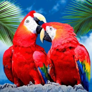 Love Parrots - Obrázkek zdarma pro iPad Air