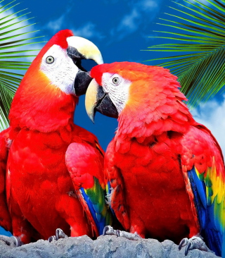 Love Parrots - Obrázkek zdarma pro Nokia C1-01