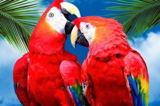 Love Parrots Background for Android, iPhone and iPad