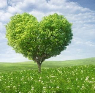 Nature Heart - Obrázkek zdarma pro 208x208