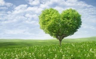 Nature Heart - Obrázkek zdarma pro Samsung Galaxy Ace 4