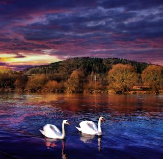 Swan Lake - Obrázkek zdarma pro 2048x2048