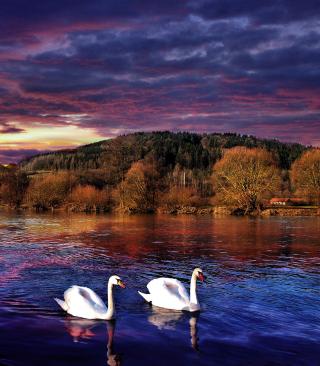 Swan Lake - Obrázkek zdarma pro Nokia 5233