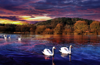 Swan Lake Background for Android, iPhone and iPad