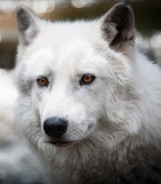 White Wolf - Obrázkek zdarma pro Nokia 5233