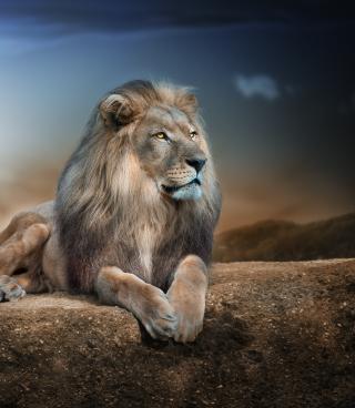 King Lion - Fondos de pantalla gratis para Nokia 5230