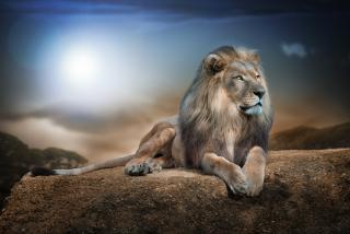 King Lion - Fondos de pantalla gratis para Samsung S5367 Galaxy Y TV