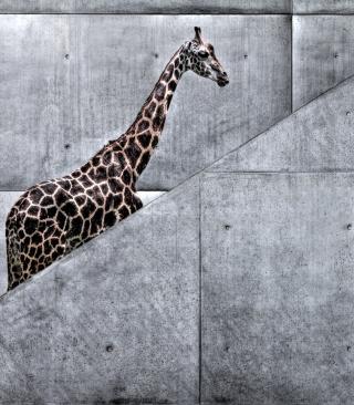 Giraffe Geometry - Obrázkek zdarma pro 768x1280
