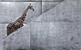 Giraffe Geometry - Obrázkek zdarma pro Fullscreen Desktop 800x600