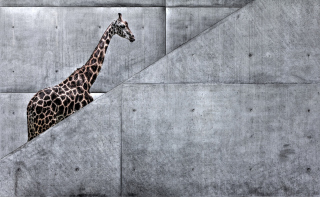 Giraffe Geometry - Obrázkek zdarma pro 480x320
