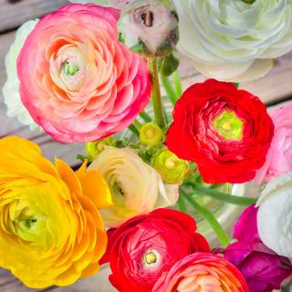 Botanical old tea rose - Obrázkek zdarma pro iPad Air