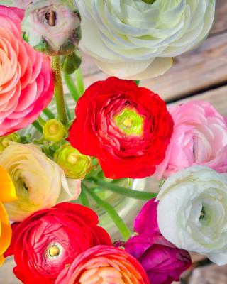 Botanical old tea rose - Obrázkek zdarma pro Nokia C1-02