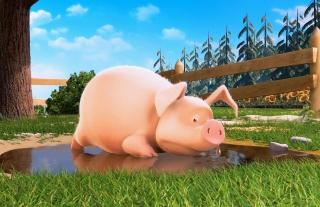 Cute Pig - Obrázkek zdarma pro 640x480