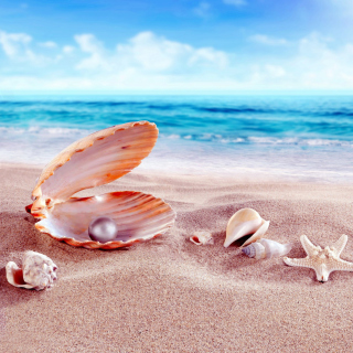 Shells and pearl - Obrázkek zdarma pro 128x128
