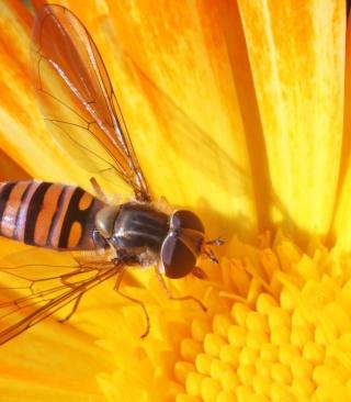 Bee On Flower - Obrázkek zdarma pro iPhone 5C