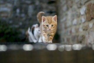 Kitten On Fence Wallpaper for Android, iPhone and iPad