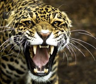 Cheetah - Obrázkek zdarma pro 320x320