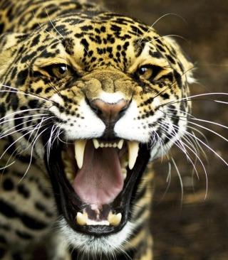 Cheetah - Obrázkek zdarma pro Nokia 5233