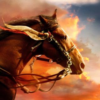 Horse HD - Obrázkek zdarma pro 128x128