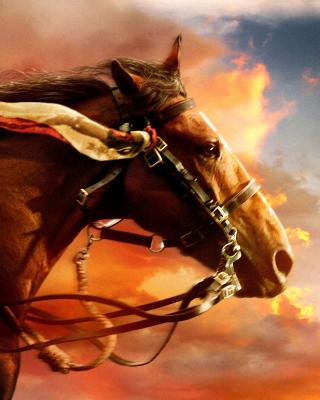 Horse HD - Obrázkek zdarma pro Nokia Asha 503