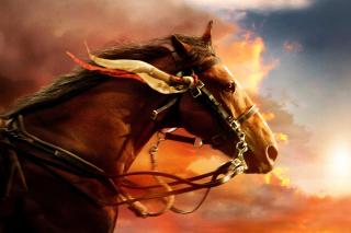 Horse HD - Obrázkek zdarma pro Nokia Asha 200