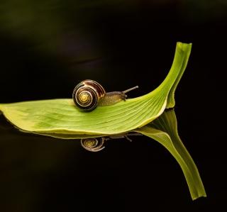 Snail On Leaf - Obrázkek zdarma pro iPad mini