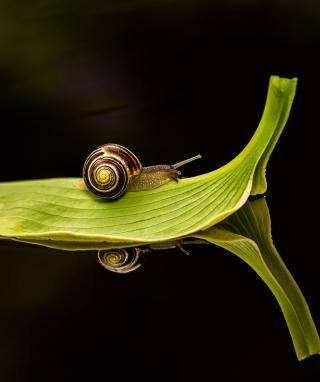 Snail On Leaf - Obrázkek zdarma pro Nokia Asha 309