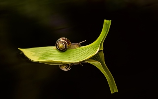 Snail On Leaf - Obrázkek zdarma pro 1280x1024