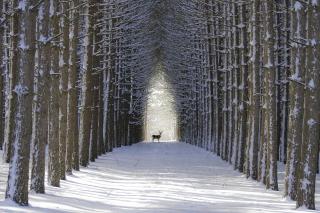 Spruce Winter Alley - Obrázkek zdarma pro Sony Xperia Z3 Compact