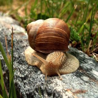 Snail On Stone - Obrázkek zdarma pro iPad mini