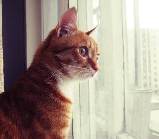 Red Cat - Obrázkek zdarma pro 1024x1024