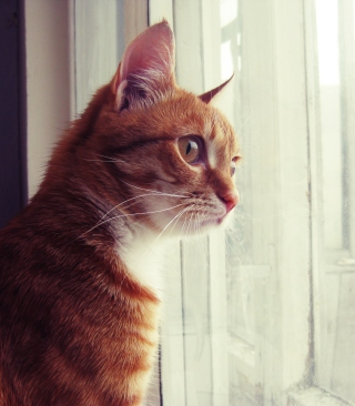 Red Cat - Obrázkek zdarma pro Nokia Asha 501